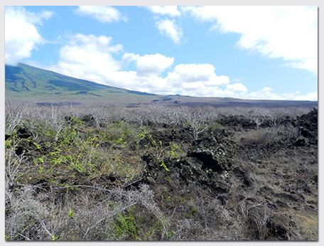 Joe-blog_Wolf-landscape