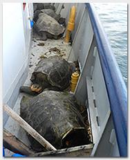 Joe-blog_tortoises-gunnels_v3
